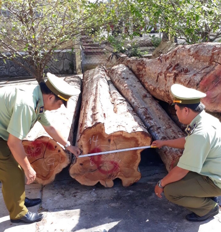 Tiền Giang: Phát hiện gần 27.000 m3 gỗ không có hồ sơ lâm sản hợp pháp 001