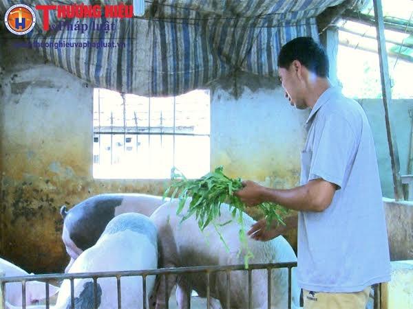 Sau giảm giá kỷ lục, giá thu mua lợn hơi đã tăng 5.000 - 7.000 đồng/kg