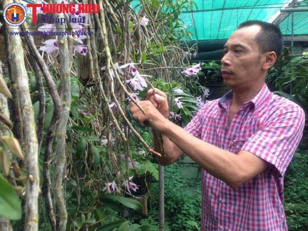 Khám phá 'rừng' hoa lan đẹp - độc - lạ ít người biết ở ngay trung tâm Hà Nội
