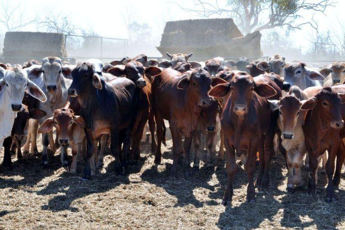 Đại gia Việt chi hàng chục triệu Đô mua trang trại Australia
