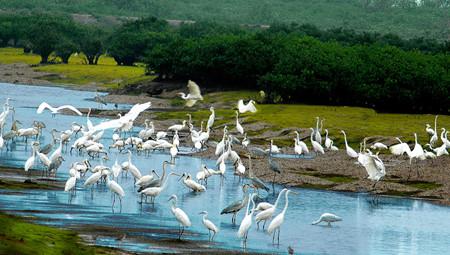 Thiên nhiên ban tặng Vườn quốc gia Xuân Thủy món quà kỳ diệu gì?
