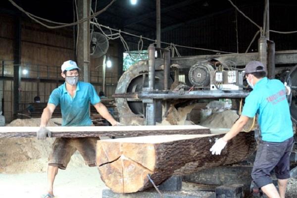 Doanh nghiệp Trung Quốc tràn sang thu mua gỗ nguyên liệu