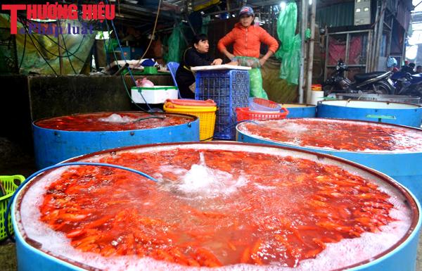 Chợ Sở Thượng đỏ rực cá chép ngày lễ cúng tiễn Táo quân
