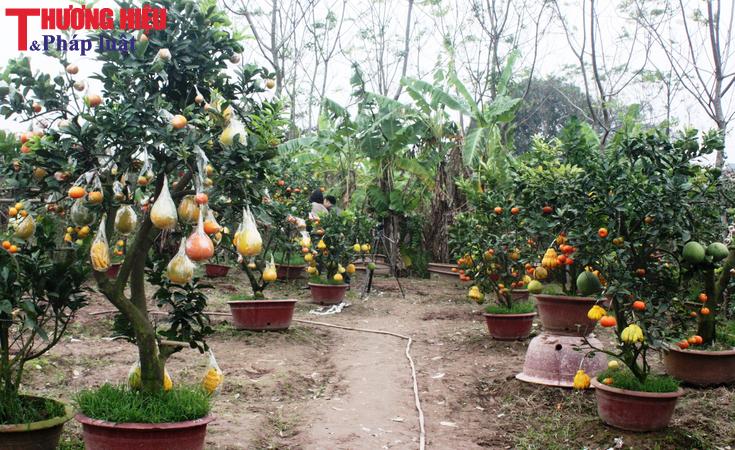 'Độc nhất vô nhị' vườn cây cảnh 10 loại quả chơi Tết