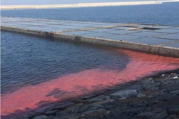 Xuất hiện dải nước bất thường màu đỏ dài 50m ở cảng Vũng Áng