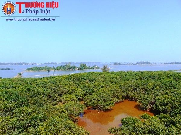 Vẻ đẹp khó cưỡng của Rú Chá - rừng ngập mặn nguyên sinh trên Phá Tam Giang