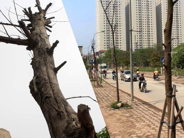 Hà Nội: Cây chết thành hàng trên cả tuyến phố