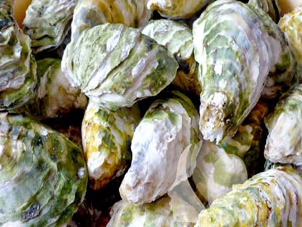 Quảng Ninh: Tiêu hủy 9 tấn hàu giống không rõ nguồn gốc