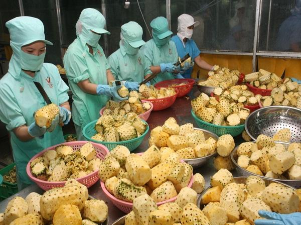 Nhiều cơ hội mở rộng thị trường cho rau quả Việt Nam