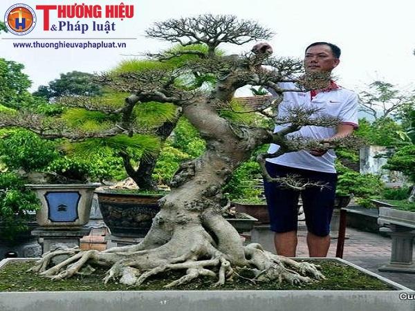 Nghệ nhân Nguyễn Ánh Dương và mối lương duyên với nghệ thuật bonsai