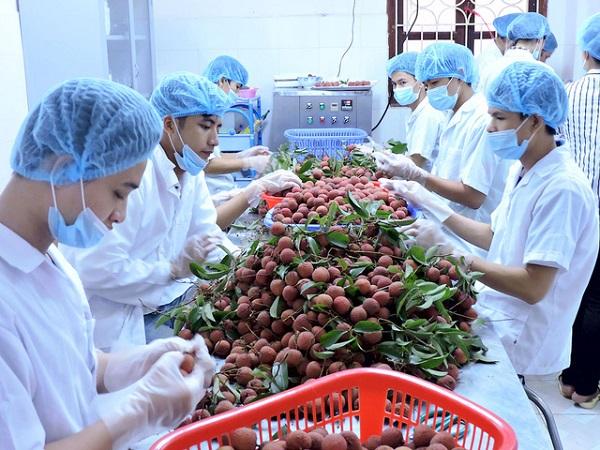 Thêm nhiều DNVN bị lừa đảo khi xuất khẩu nông sản sang UAE