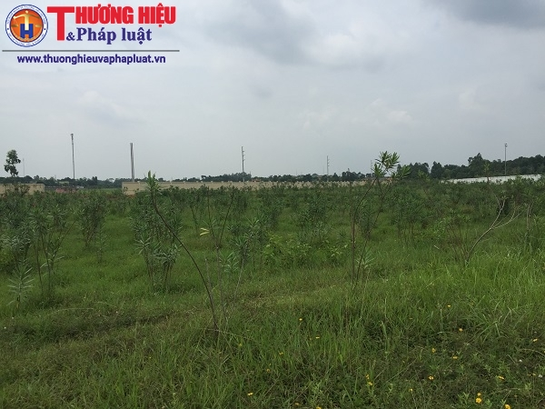 Doanh nghiệp 'hóa phép' 1,9 ha đất nông nghiệp: Trách nhiệm UBND H.Sóc Sơn ở đâu?